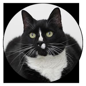 Eläinlääkärin palvelut kissoille ja muille kodin lemmikeille