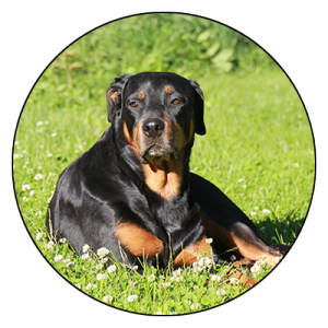 Toosilan-elainpalvelu-oy-koirat-428
