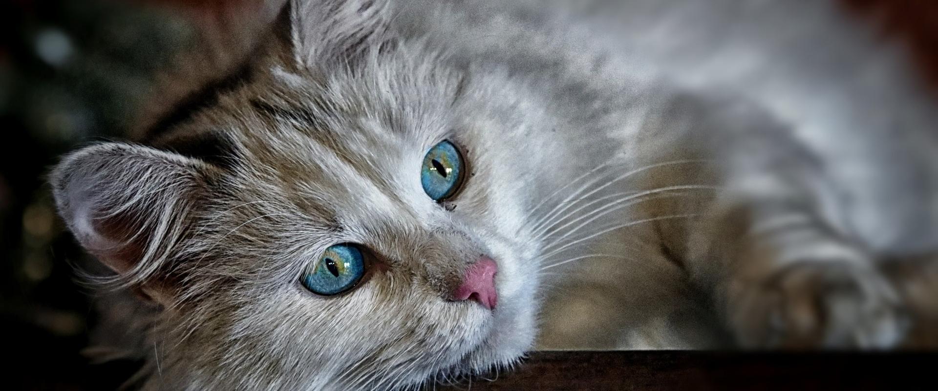Toosilan Eläinlääkäripalvelu Oy - lemmikkieläinten vastaanotto ja kotikäynnit