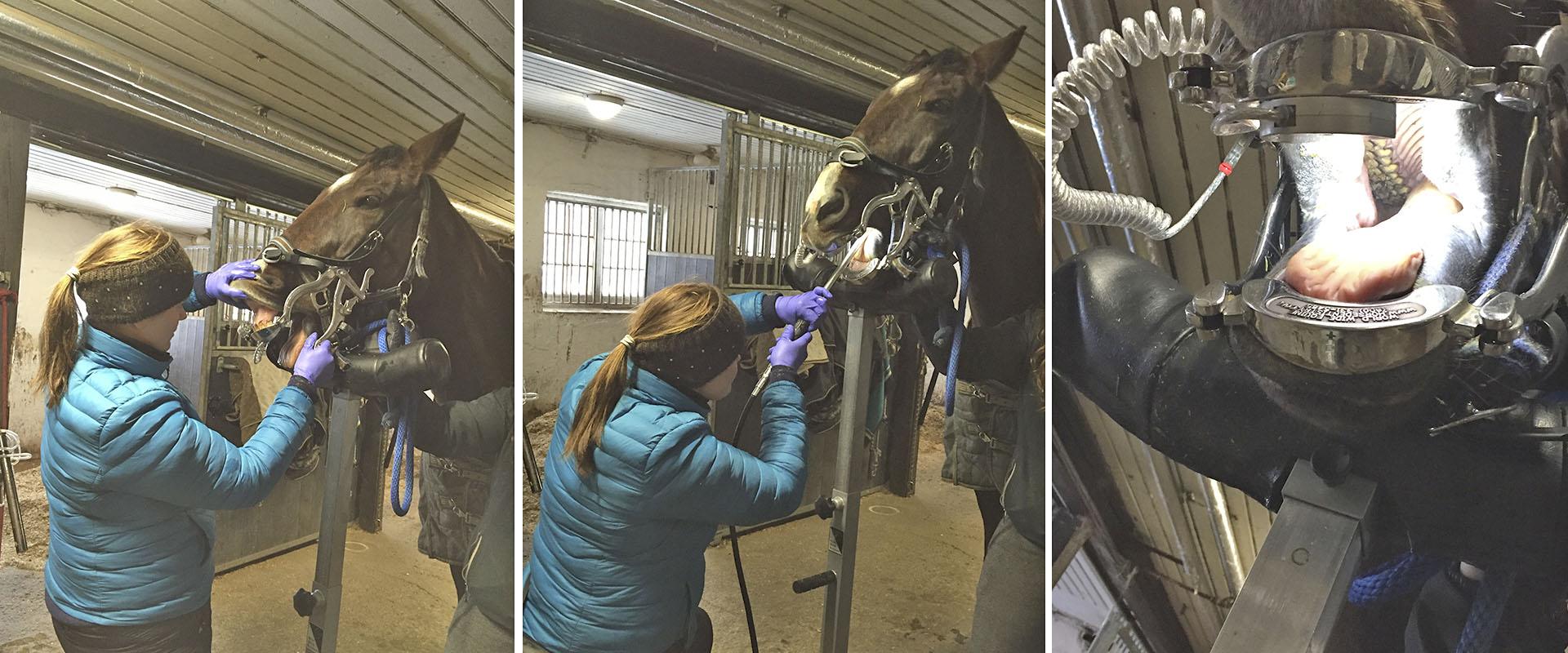 Hevosten hammashoito | Toosilan Eläinlääkäripalvelut Oy - Jessica von Wendt
